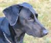 Gespräch zwischen H. Schäck (IGOR) und Hundehalter. Hundekot, Hundekacke