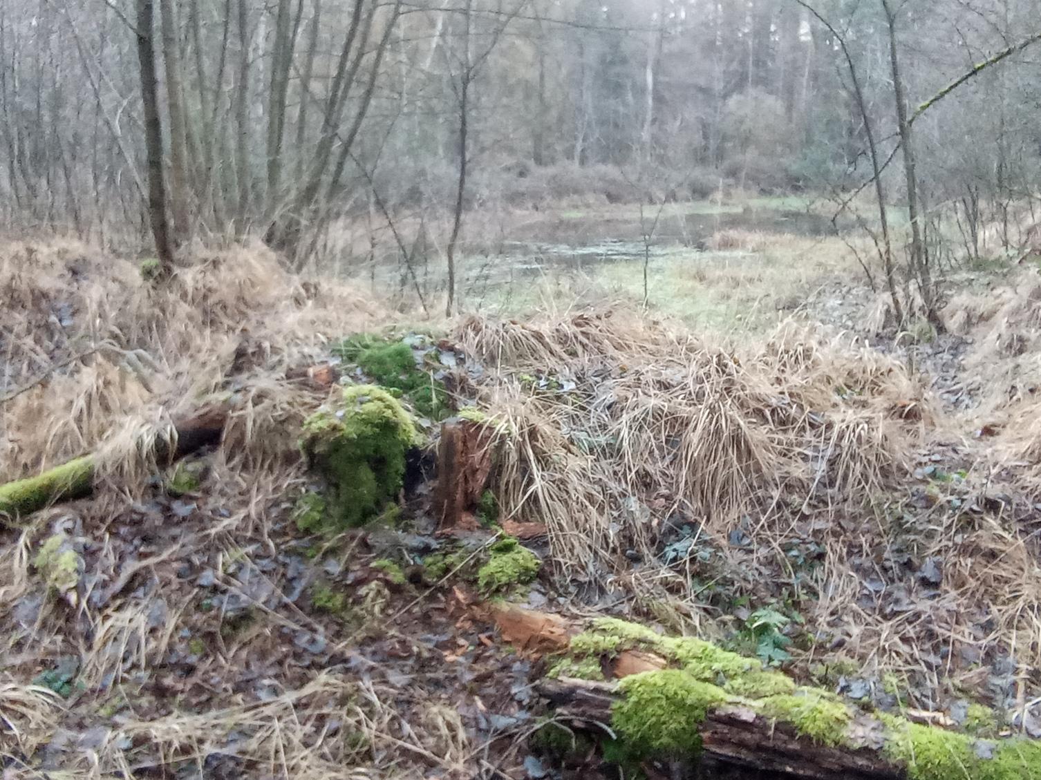 Wald_MR3