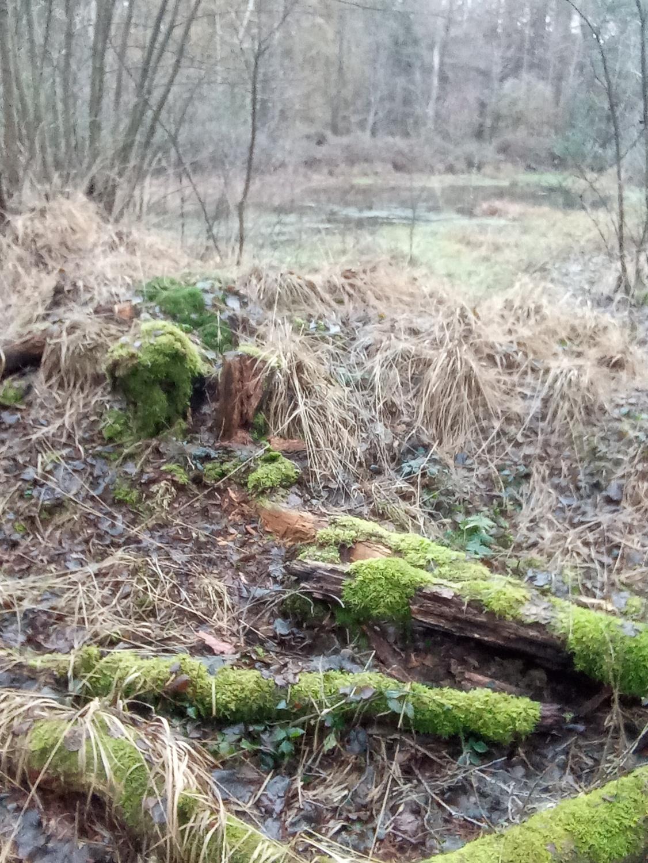 Wald_MR4
