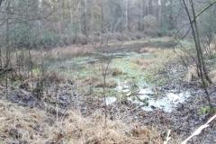 Wald_MR2