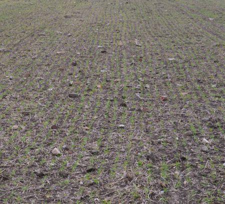 Steine auf dem Feld