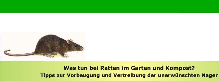 Ratteninfoblatt der Stadt Rödermark.