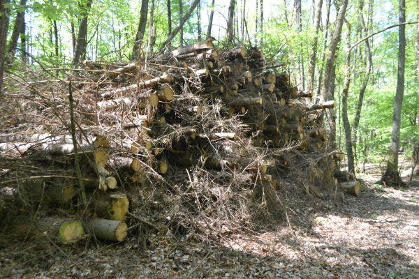 Holzstapel nähe BraaredBernsche